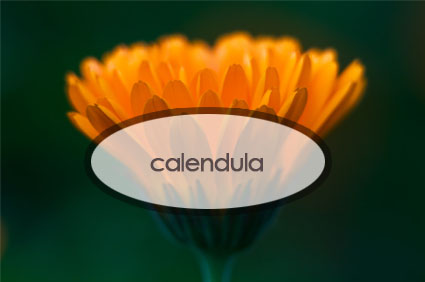 calendula.the-good-stuff-botanicals.jpg